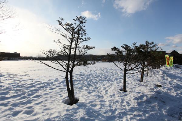 Tận hưởng mùa đông xứ tuyết Hokkaido-19