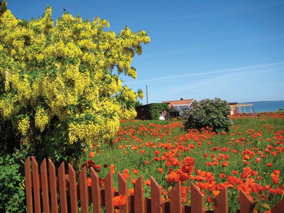 Gotland, chốn thần tiên Bắc Âu - 3