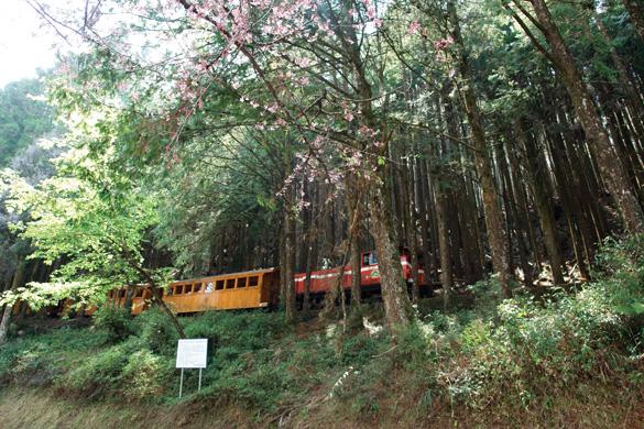Rừng núi tươi đẹp ở Đài Loan -1