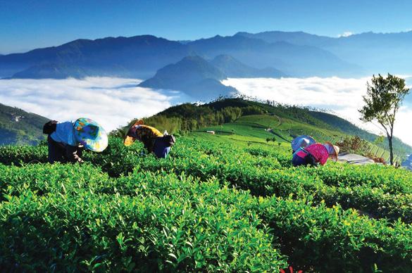 Rừng núi tươi đẹp ở Đài Loan -3