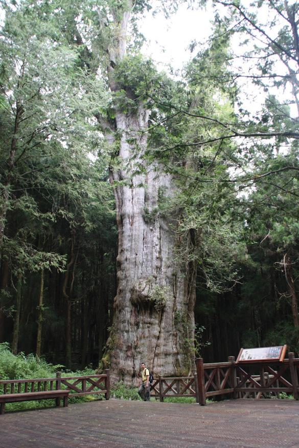 Rừng núi tươi đẹp ở Đài Loan -5