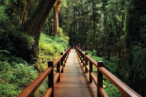 Rừng núi tươi đẹp ở Đài Loan -4