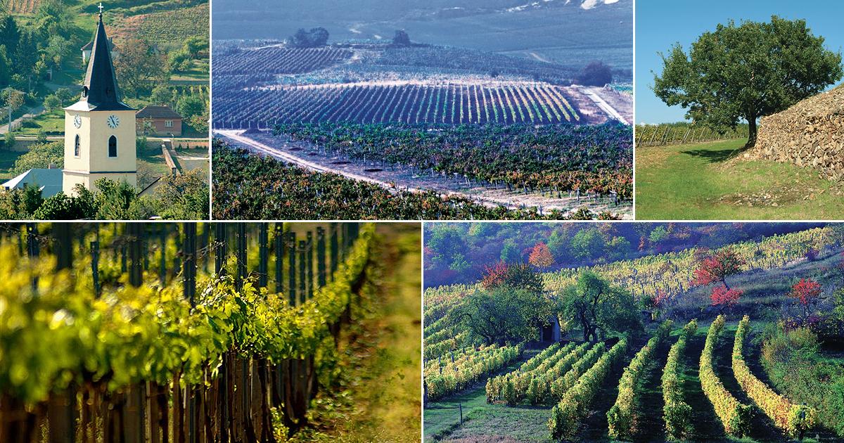 Rượu vang Tokaji Aszu, công nghệ hỗ trợ truyền thống - 11