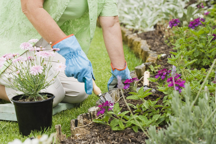 how-to-start-a-flower-garden