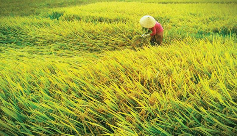 DN560_BvHTC060614_Thuong-lam-dang-cap-7
