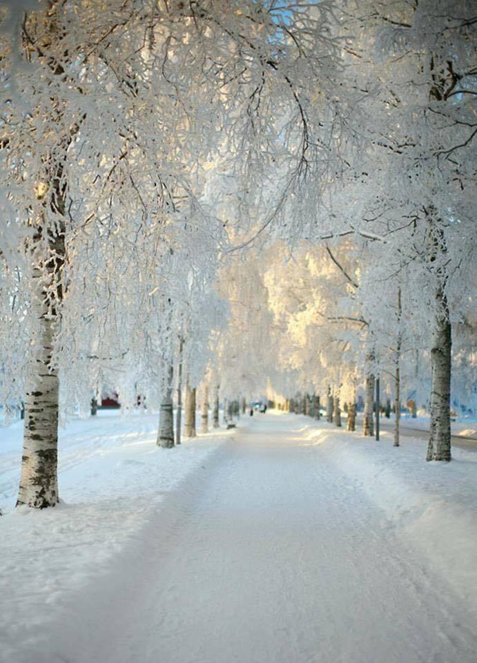 Stunning Snow Photography