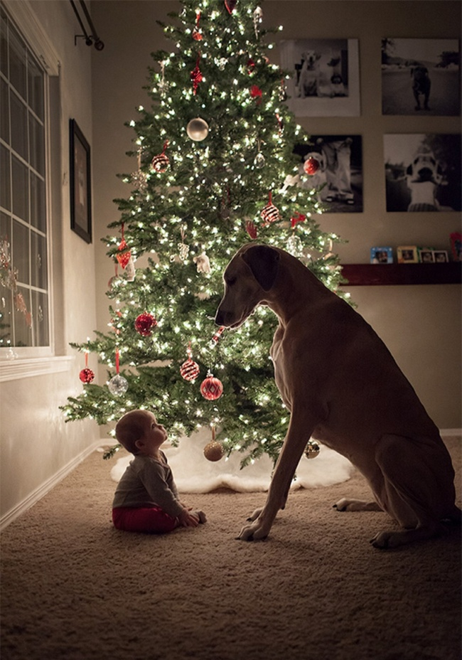 8728710-R3L8T8D-650-02-cute-big-dogs-and-babies-34