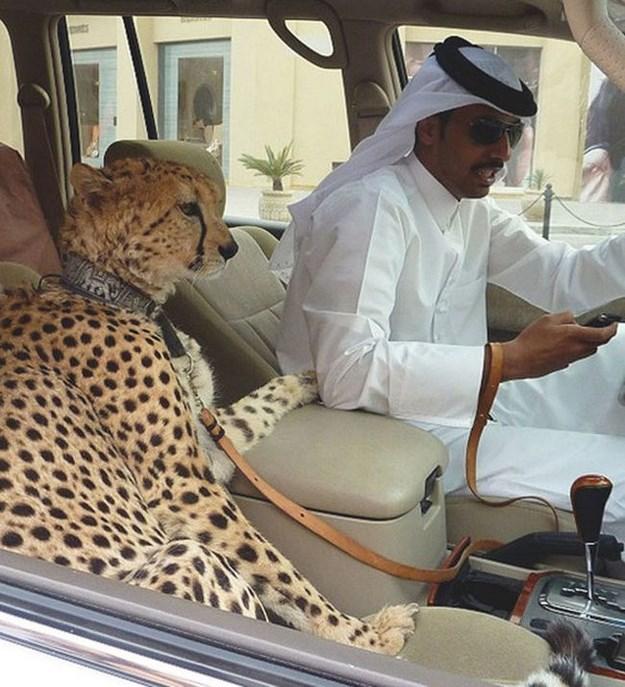 Dubai-Mascotas