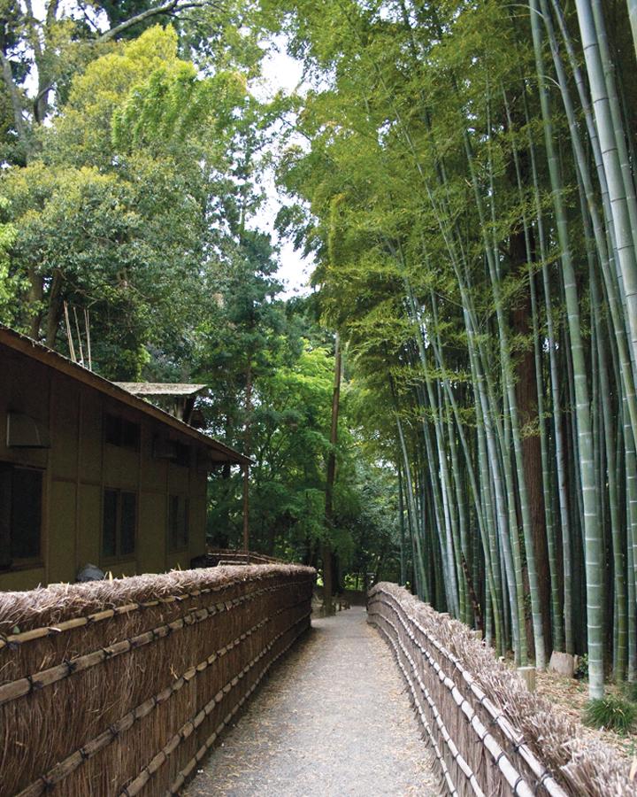 Những địa điểm không thể bỏ qua ở Ibaraki -7