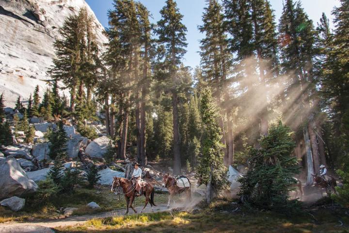 Mule Train - Yosemite National Park - CA
