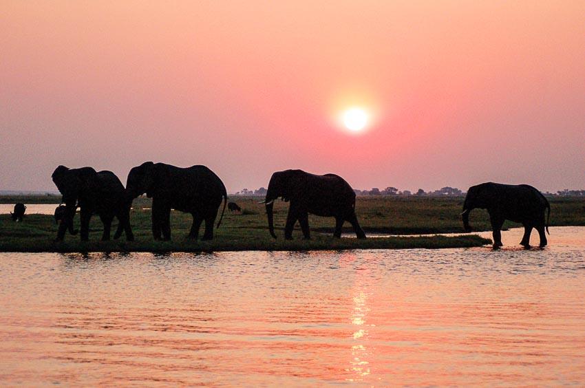 trai-nghiem-thien-nhien-hoang-da-o-Okavango