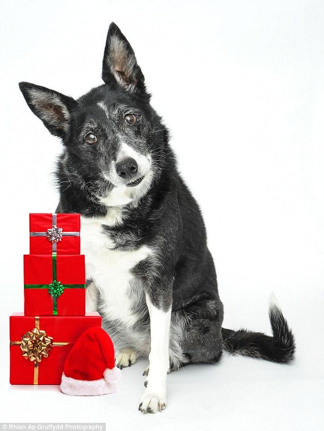 Mang hơi ấm Giáng sinh cho những chú chó cơ nhỡ