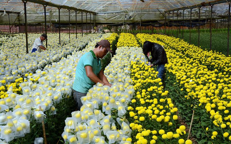 Tín hiệu mới cho việc xuất khẩu hoa ở Đà Lạt