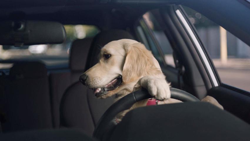 Subaru ra mắt series quảng cáo xe do các chú chó vui nhộn thủ vai chính
