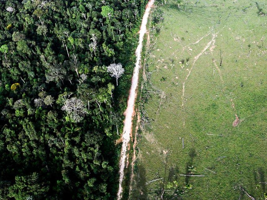 22 bức ảnh cho thấy rừng Amazon đang bị tàn phá nghiêm trọng bởi con người
