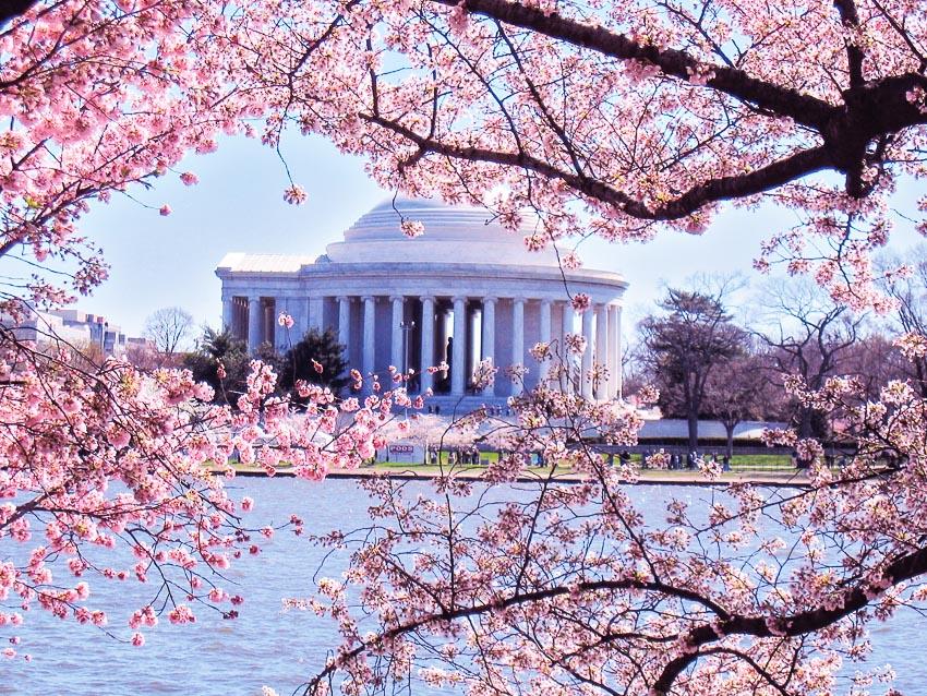 Thế giới tưng bừng chào đón lễ hội hoa anh đào