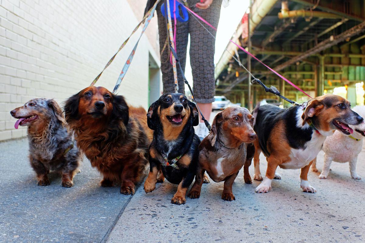 Wag là nền tảng kết nối giữa người muốn tìm việc làm thêm và chủ chó bận rộn.