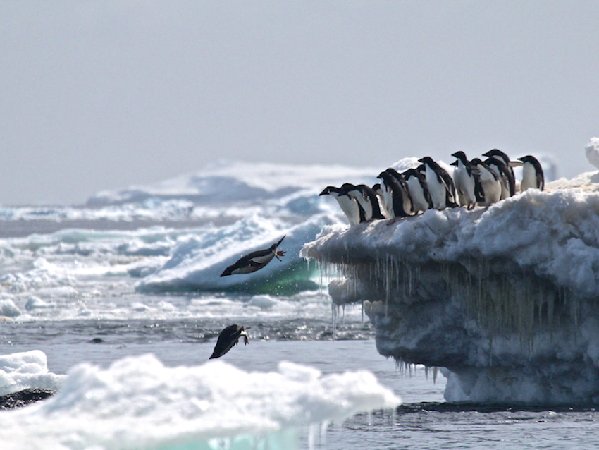 Phát hiện đàn chim cánh cụt 1,5 triệu con ở vùng Nam cực xa xôi