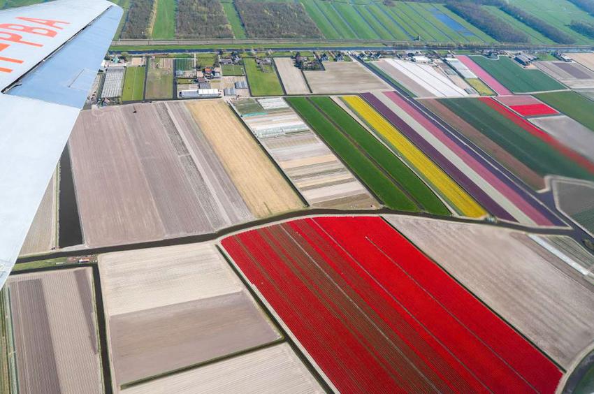 Rực rỡ mùa hoa tulip ở Hà Lan, hoa chuông xanh ở Bỉ