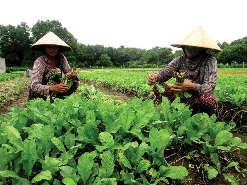 Giải pháp toàn diện cho chuỗi giá trị nông sản