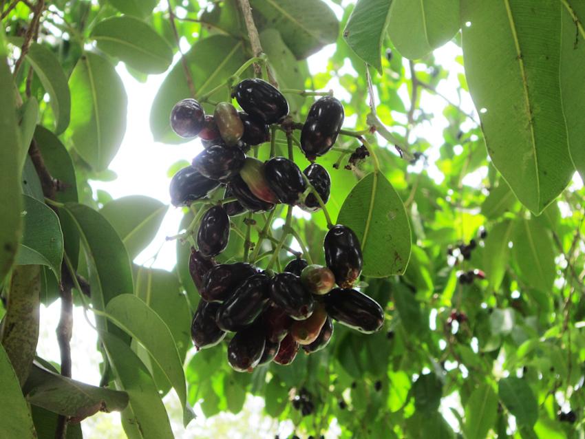 trái cây mùa xưa