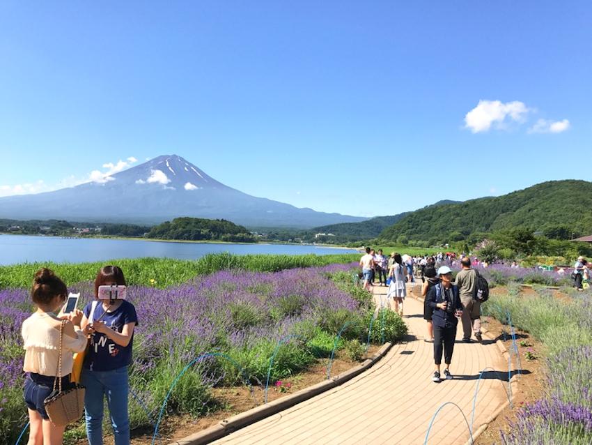 Lễ hội hoa oải hương đẹp mê đắm tại công viên Oishi, Nhật Bản