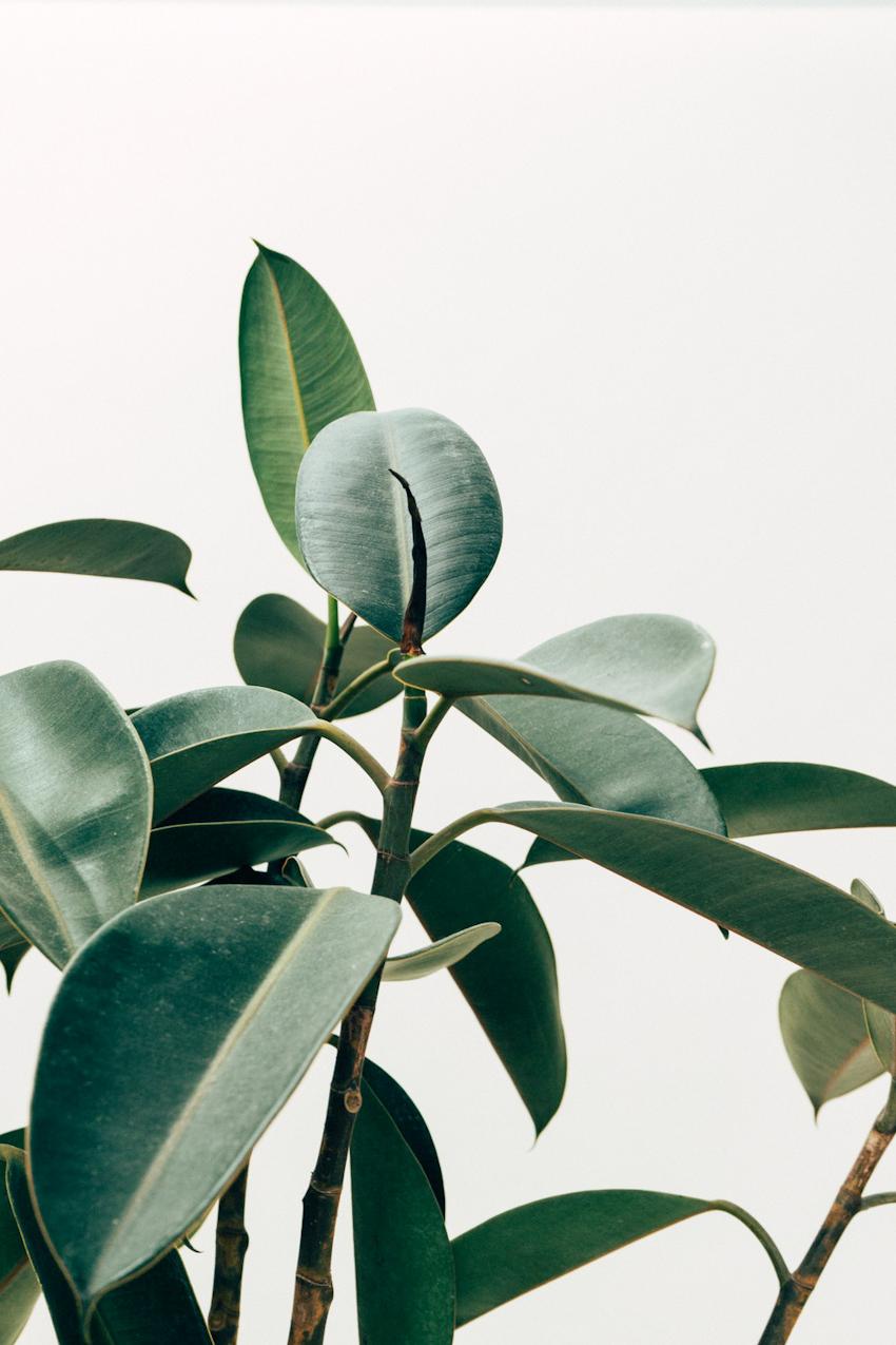 Thanh lọc không khí với 10 loại cây thích hợp trồng trong nhà