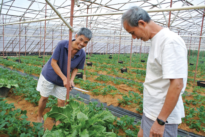 Nông trại organic độc đáo ở Đà Lạt