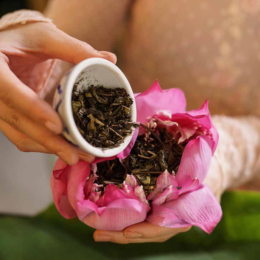 Mê mẩn hương trà ủ sen Tây Hồ