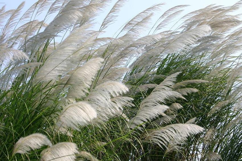 Khi gió chướng thổi…