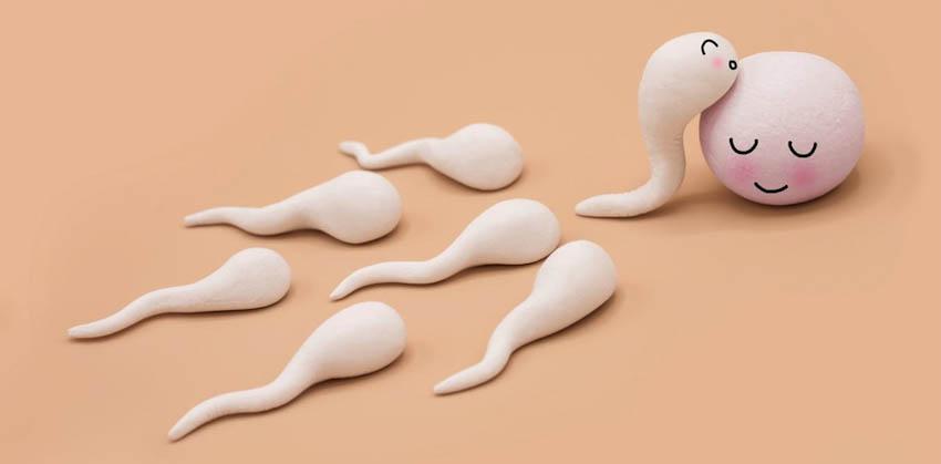 Chất lượng tinh trùng - 8 cách đơn giản để bảo vệ chiến binh-6