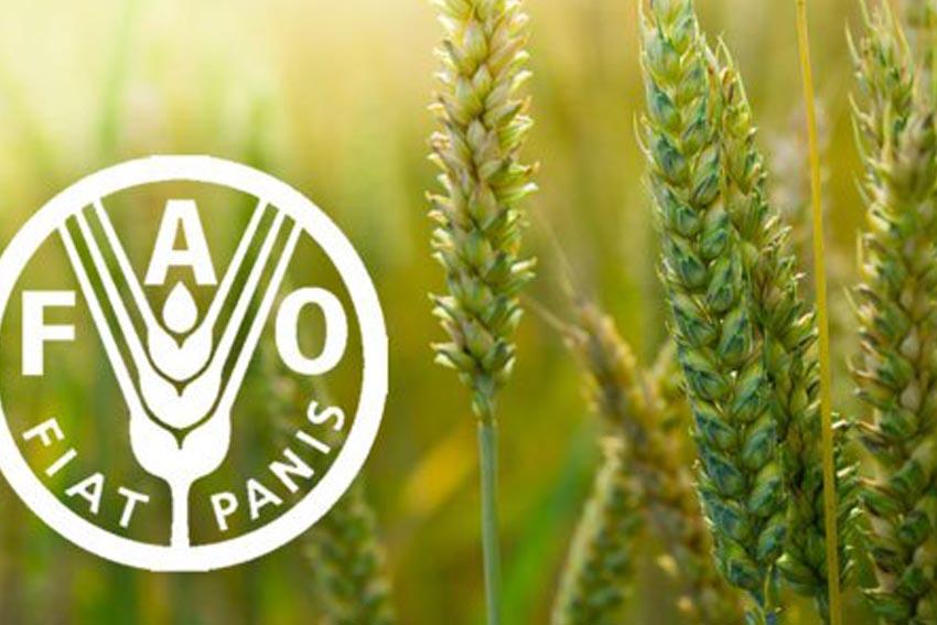 o-chuc-nong-luong-lien-hiep-quoc--FAO