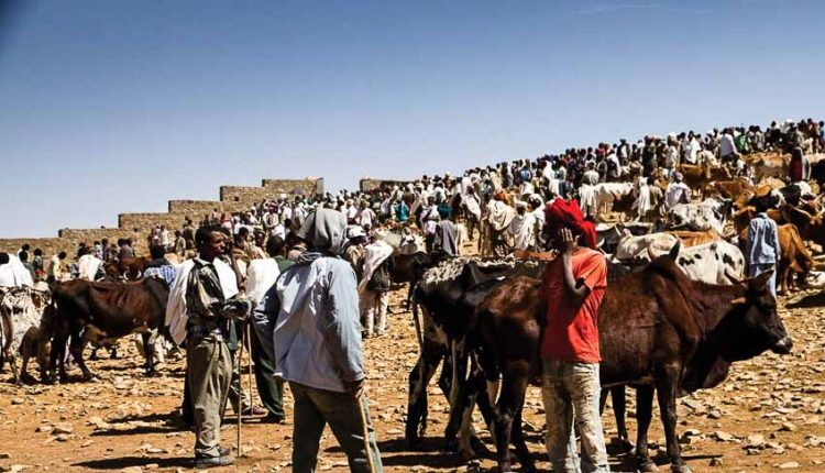 Cattle Market Day in Aksum