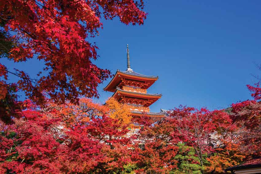 """Đã đến lúc """"chạm tay vào mùa thu"""" Nhật Bản"""