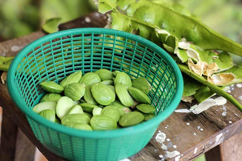 Đậu Parkia Speciosa - loại đậu thách thức tâm lý người ăn 1