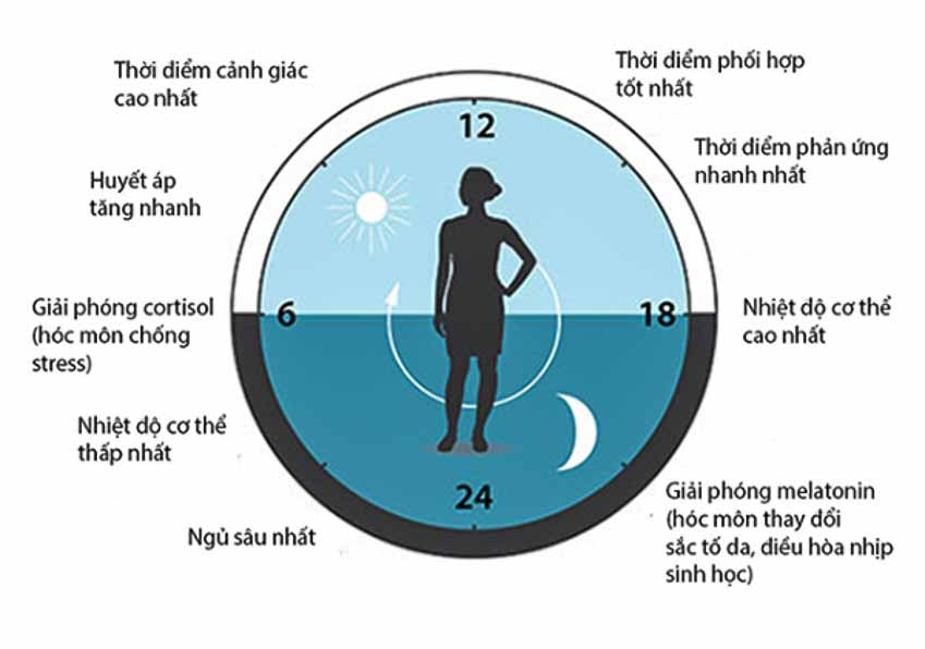 DNP-hoach-dinh-dong-ho-sinh-hoc-co-the-hoat-dong-hieu-qua-nhat-1