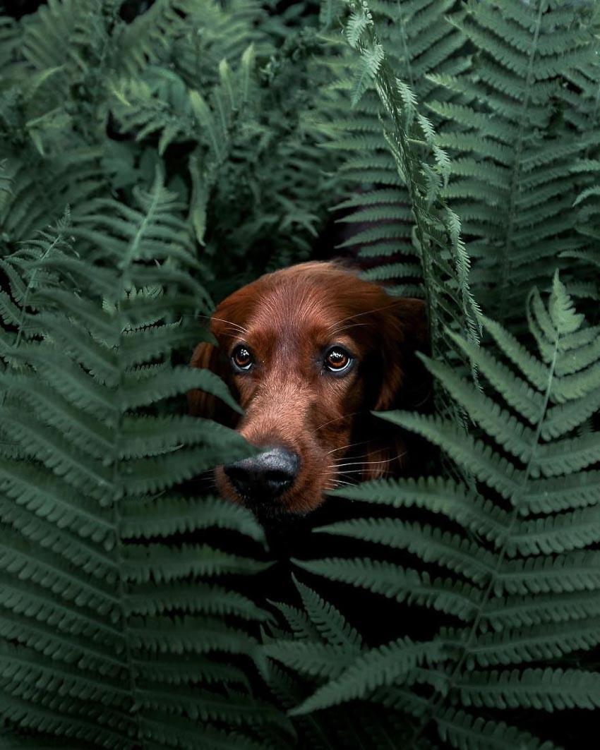 Chú chó Troja 1