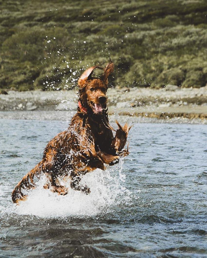 Chú chó Troja 8