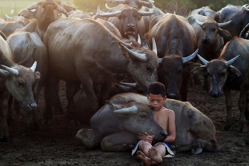 Việt Nam lọt top ảnh đẹp giải thưởng ảnh Siena quốc tế 4