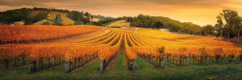 rượu vang Australia 5