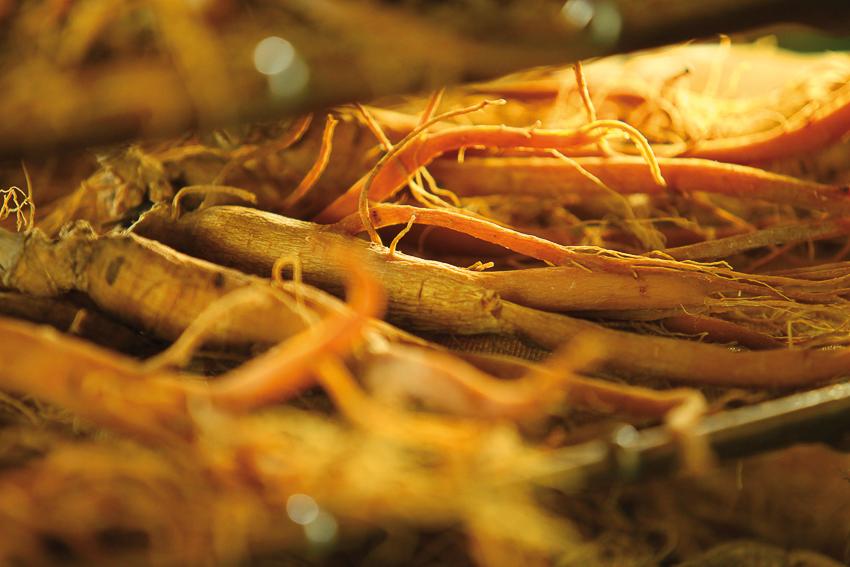 Củ sâm tươi sau khi sấy sẽ chuyển sắc đỏ nên được gọi là hồng sâm.