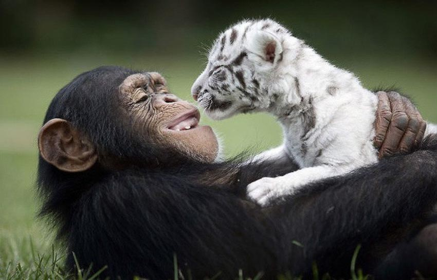 Tan chảy với loạt ảnh về tình bạn tuyệt đẹp khác loài của