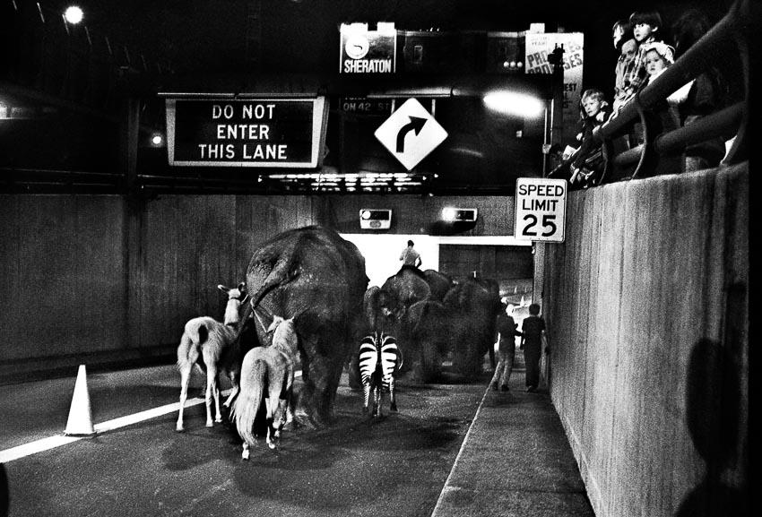 Rạp xiếc Ringling Brothers và Barnum & Bailey dắt voi của họ qua đường hâm Holland vào New York trong cuộc đình công ngành vận tải
