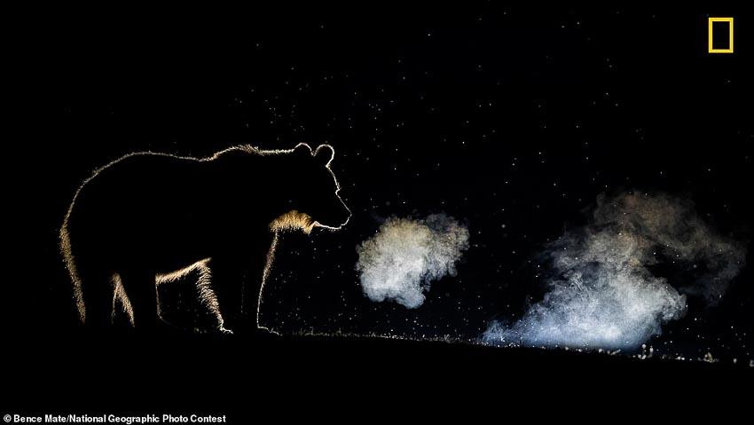 Top 10 bức ảnh ấn tượng dự thi giải thưởng nhiếp ảnh National Geographic 2018