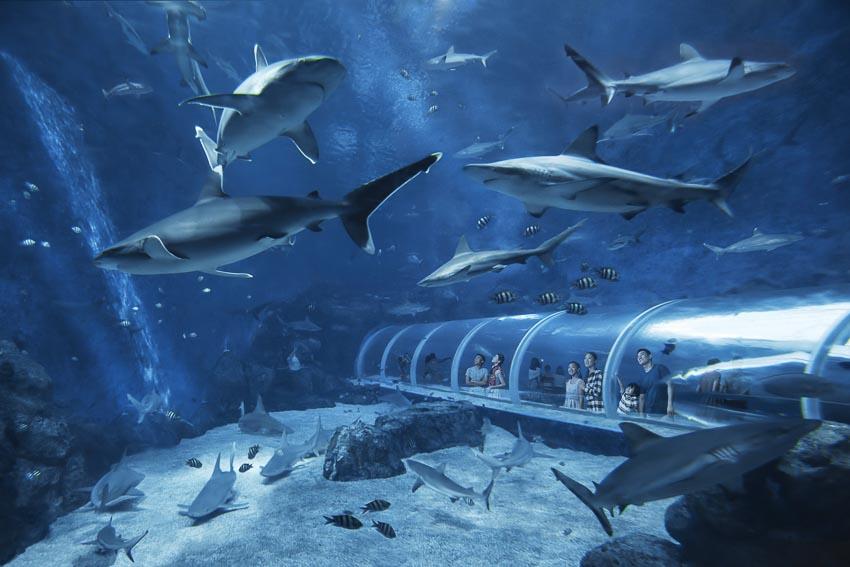 Kỳ nghỉ thú vị của gia đình tại Resorts World Sentosa 13