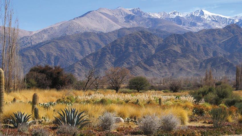 Xương rồng, loài cây đặc trưng của hoang mạc Andes