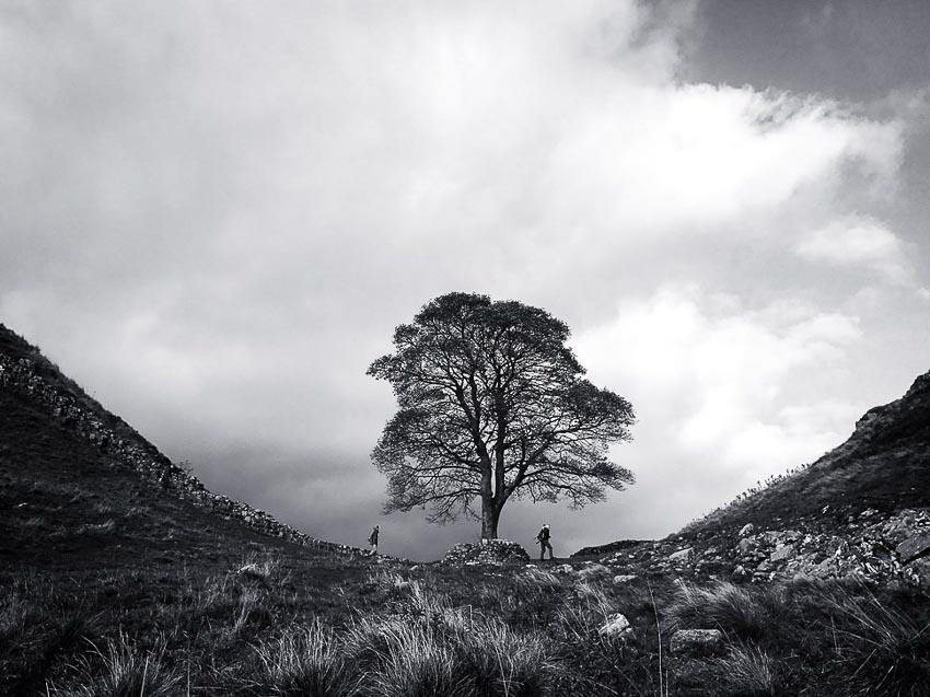 """""""At Sycamore Gap"""" – Tác giả: Asuman Robson / Chụp bằng iPhone 7"""