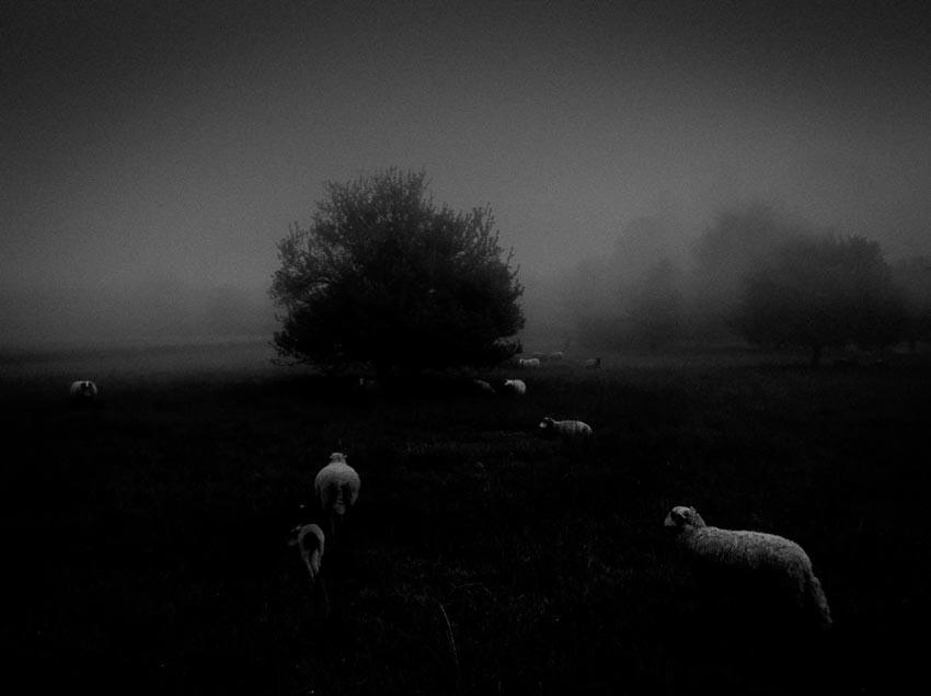 """Morning Fog"" – Tác giả: Sukru Mehmet Omur / iChụp bằng iPhone 6S"