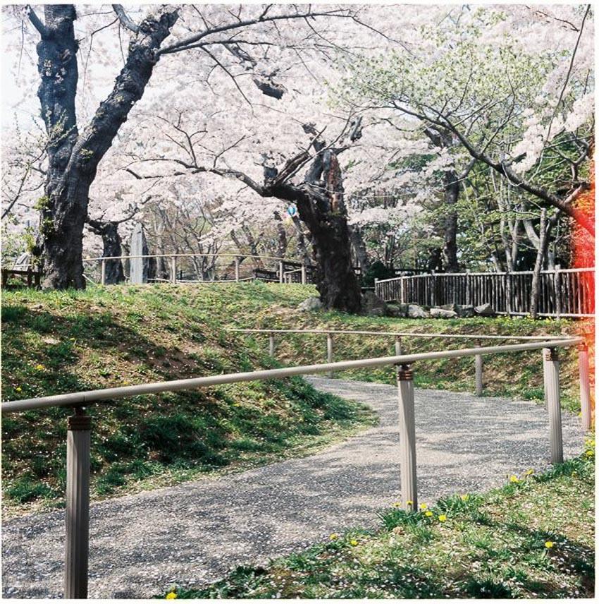 Lịch ngắm hoa anh đào trên khắp Nhật Bản năm 2019 - Truyền