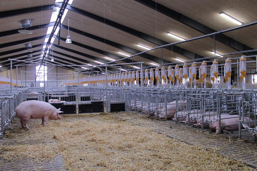 NS BlueScope Lysaght Việt Nam hợp tác với SKIOLD phát triển các giải pháp thông minh cho ngành chăn nuôi 1